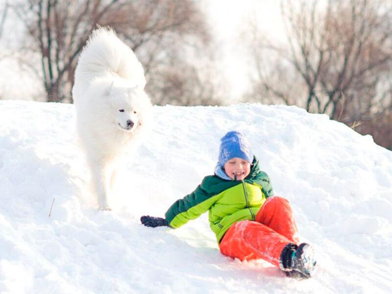 Зимняя фотосессия – лучшие идеи и образы для уличной и студийной съемки